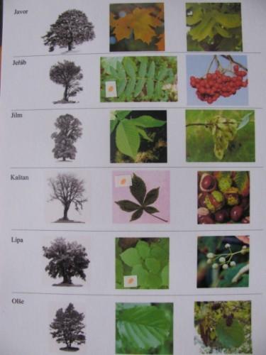 Miniatlas stromů